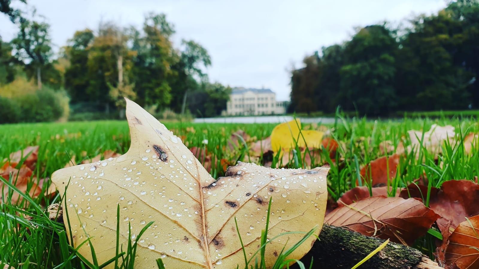 herfst op het parc 1